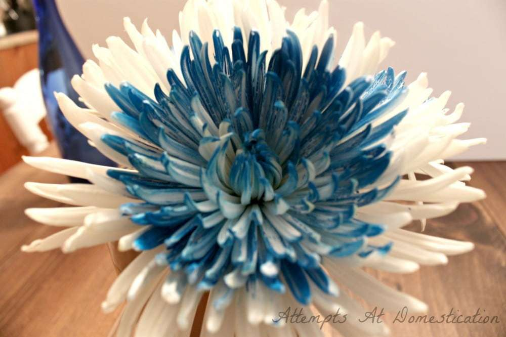 blue-white-mums