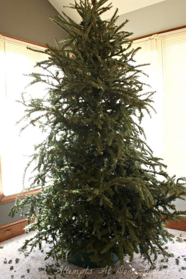 Dried out Christmas tree -